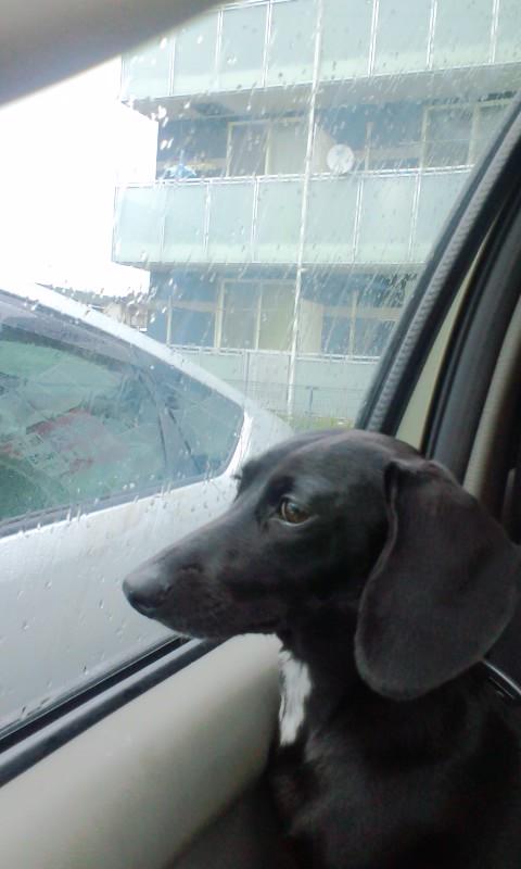 雨のち雨。。。時々雨、、、